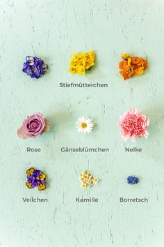 Essbare Blüten Liste: Übersicht