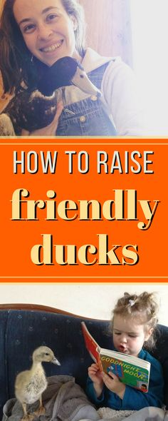 BEST tips for raising really friendly ducks that actually love spending time with you!