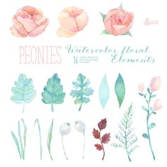 Peonies Watercolor Floral Elements Clipart. Hand painted flowers, separate, wedding diy elements, greeting, invite, printable, blossom, pink