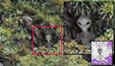 Alien Being caught on Camera in Cordoba, Argentina? - June 12, 2014 |UFO Sightings Hotspot..Hmm