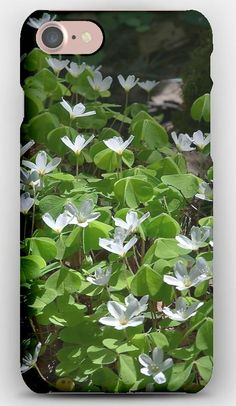 iPhone 7 Case Wood sorrel, Oxalis, Flowering, Leaves, Sun, Forest