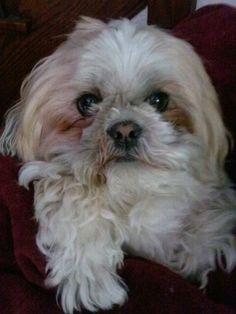 Rescue dogs rock #adoptdontshop