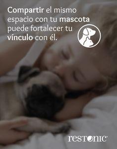 Compartir el mismo espacio con tu mascota puede fortalecer tu vínculo con él. #Restonic #consejos #tips