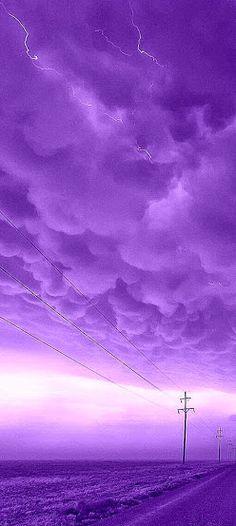 Purple everywhere . . .