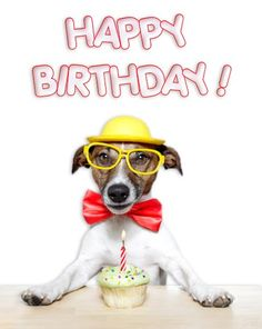 Dog Birthday Wishes Happy Quotes Jack Russell Terrier Friendship