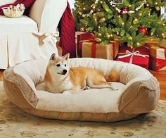 Dog Orthopedic Bed Memory Foam Mattress LARGE Comfort Indoor Pet Puppy Protector #DogOrthopedicBed