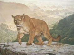 Charles Frace SHASTA Cougar LTD ED Art Print - SIGNED