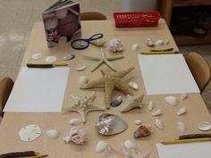 Exploring Shells....