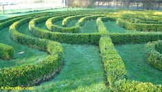 Green hedge labyrinth from Twitter -Embedded image permalink