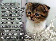 Aww.... poor kitty cat.