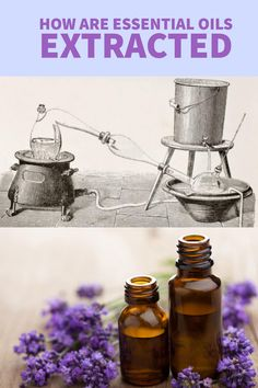 Want to know how essential oils are extracted from their natural plant materials? Read this excellent article by the National Association for Holistic Aromatherapy! It will tell you everything you need to know and more!! #Essentialoils #aromatherapy #distillation #