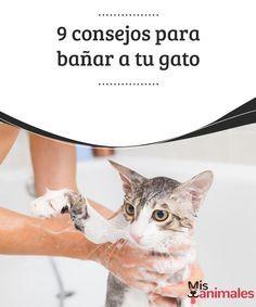 9 consejos para bañar a tu gato Bañar a tu gato suele ser una misión difícil pero no imposible. Te dejamos los mejores consejos para intentar llevar la situación a buen puerto. #gato #baño #consejos #situación