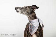 Tula and the Vichy Grey & Dots Civic Dog® scarf, square pocket. http://civicdog.com/product/tuli-pañuelo-civic-dog-vichy-gris-dots-salmón