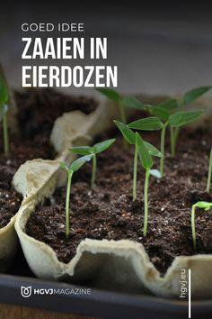 Herb Garden, Indoor Garden, Vegetable Garden, Home And Garden, Green Tips, Flower Garden Design, Growing Seeds, Edible Garden, Outdoor Plants