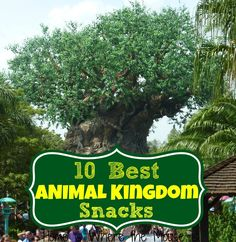 10 Best Animal Kingdom Snacks | Home is Where the Mouse is | Disney Food | Disney Snacks