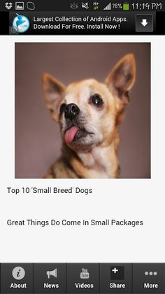 The absolute and compete app about Best Small Dog Breeds! This is the most complete app you want when it comes to information about Best Small Dog Breeds. Get the latest updates, news, information, videos, photos, events and amazing deals for Best Small Dog Breeds app lovers.    Download this app now!  Find out the top 10 small breed dogs that make the best family pets.Discover everything you want to know about Best Small Dog Breeds! Download and get this app to have these ...