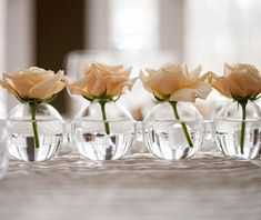 Single white rose. A cute idea for secondary areas of the wedding. Bar tables, gift table, sitting area, etc.