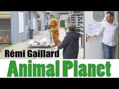 ANIMAL PLANET (REMI GAILLARD) - YouTube