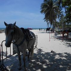 Hau Hin Places To Visit, Horses, Animals, Haus, Animales, Animaux, Animais, Horse, Words