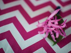 Nerine Lily and Lemon Leaf Boutonniere