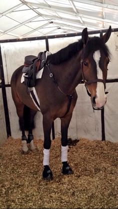 all tacked up...& ready to hurry up and wait!