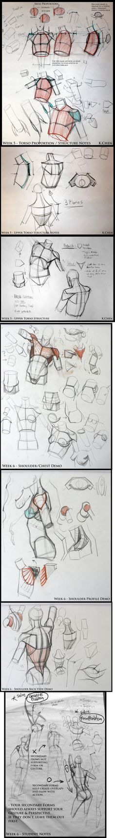Upper torso / Shoulder & chest structure - analyticalfiguresp08.blogspot - Kevin Chen #analytical #drawing #figureDrawing #instructorDemo #structure