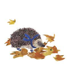 all Archieven - Machteld Hardick Hedgehog, Hedgehogs