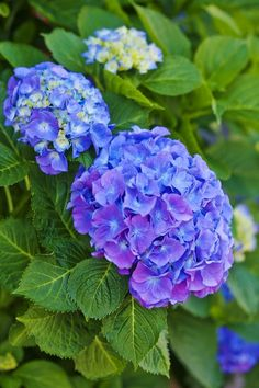These Are The Flowers That'll Thrive in Your Shady Yard Hydrangea shade perennials Best Perennials For Shade, Long Blooming Perennials, Flowers Perennials, Best Plants For Shade, Purple Flowering Plants, Shade Garden Plants, House Plants, Unique Plants, Cool Plants