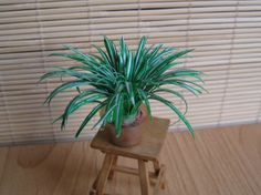 Spider plant tutorial in French.   The photos are good so would look at Mother in law's tongue tutorial and adapt some of those techniques for these more delicate leaves.