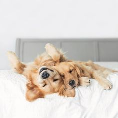 Heartwarming Photos of Two Adorable Golden Retrievers Who Are Inseparable BFFs - Photography, Landscape photography, Photography tips Cute Baby Animals, Animals And Pets, Funny Animals, Irish Setter, Cute Dogs And Puppies, Doggies, Happy Dogs, Animal Photography, Photography Books