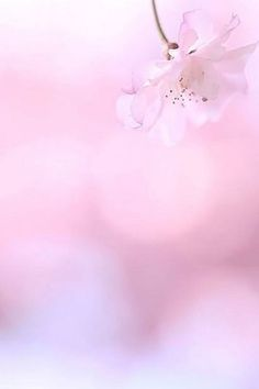 Pink bokeh ✿⊱╮