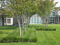 edel in weiss -allium und weiss panschierte gräser | traum, Garten und erstellen