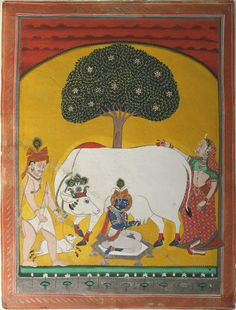 Krishna Milking Cow. Nathdwara, Rajasthan - c1840.  Medium: Opaque watercolour with gold on wasli.