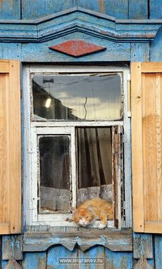 рыжий в окне . lots of curious in & on & everywhere on houses . they do love 💗 highest places . Crazy Cat Lady, Crazy Cats, Big Cats, Cats And Kittens, Cute Cats, Funny Cats, Animals And Pets, Cute Animals, Cat Window