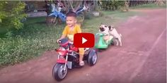 Adorable Pug Attempting to Hitch a Ride on This Kid's Trike Is the Silliest Thing You'll See All Day