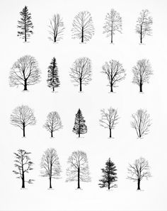Tree Drawings drawings, tattoo spiration art | drawings and art | pinterest