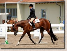 Beautiful hunter under saddle horse ❤️❤️❤️😍😍 Pretty Horses, Beautiful Horses, Hunter Under Saddle, Hunt Seat, Whatever Forever, Bay Horse, Horse Training Tips, Western Pleasure, English Riding