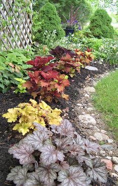 Colorful Foliage Lights Up the Garden | Minnesota Gardener Magazine Web Articles