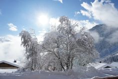 Arbre enneigé #ovronnaz Places In Switzerland, Beautiful Places, Outdoor, Winter, Outdoors, Outdoor Games, Outdoor Living