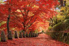 Mt.Yoshino | Nara| 吉野山 |