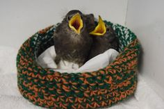 Knitted, crochet nests put to use at local wildlife rehab centre - Local - Truro Daily News
