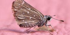 les 115 meilleures images du tableau papillons de papier sur pinterest. Black Bedroom Furniture Sets. Home Design Ideas