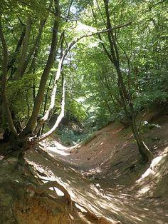 Image detail for -roman road winterfold heath sunken lane jelleys hollow surrey england ...