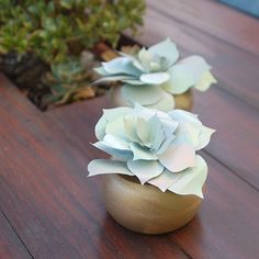 HOME DZINE Craft Ideas | Recycled can succulents