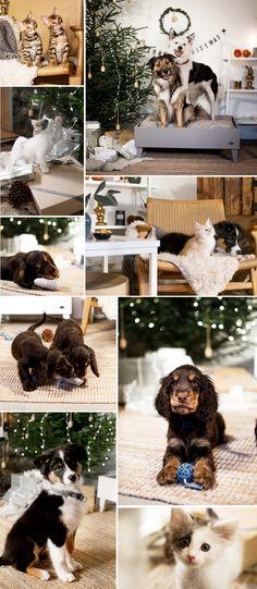 Skandinavisk design till katt och hund. Jul. Cockerspaniel. Hundsäng. Kattbädd. Norsk Skogskatt. Kattungar. Hundvalp. Cockerspaniel