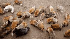 zao-fox-village-japan-37