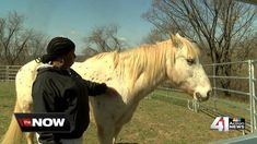 """""""Equine therapy is taking psychology sessions out of the office and into the pen. t's a non-traditional, but promising type of therapy.""""I've seen people go from suicidal to thriving in less time in horse therapy than talk therapy by far,"""" said Beth Russell, director of the Kansas City Rescue Mission Women's Center."""""""