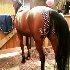 Chloe, an endurance horse, with her hamstring tear taped by Irma Verheij of Sporthorse Therapies. Get well soon Chloe, and #gostrongerlonger #rocktapeequine