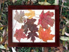 fun with fall leaves