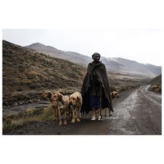 """Pic by @alonskuy """"Lesotho series. A Basotho man poses for a portrait as he makes his way with his dogs through a quiet mountain pass, in Mokhotlong, Lesotho."""" #TheLightContinent #sundaytimesza #photojournalism #documentary #africa #lesotho polychromeseedInspiration @pvth_picvsso"""